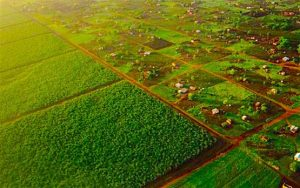 agriculture-africa